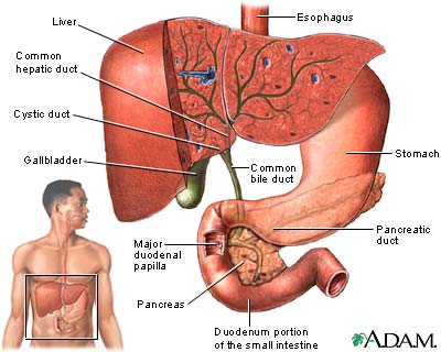 what is gallbladder pain symptoms