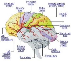 gambar otak.htm
